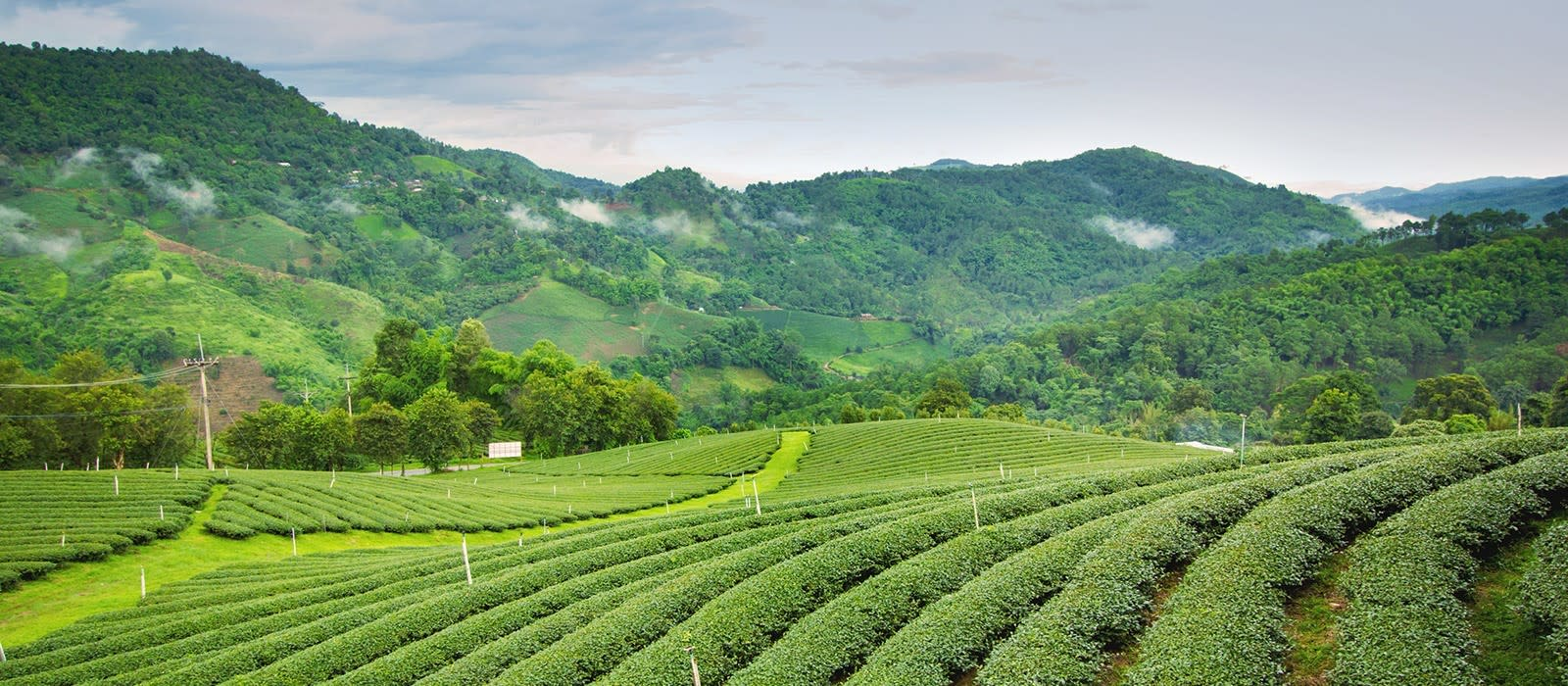 Darjeeling All Set Up to Welcome Tourists from September